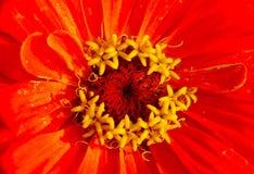 exotisk blomma Arkivbild
