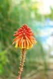 exotisk blomma Arkivbilder
