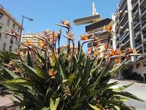 exotisk blomma Arkivfoto