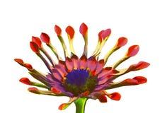 exotisk blomma för Adobekorrigeringar hög för målning för photoshop för kvalitet för bildläsning vattenfärg mycket Royaltyfri Bild