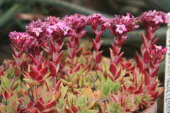 Exotisk blomma för makro i miniatyrvärld Royaltyfri Fotografi