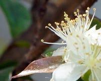Exotisk blomma för passionfrukt royaltyfria bilder