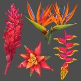 Exotisk blomma- och sidauppsättning Tropiska blom- beståndsdelar för garnering, modell, inbjudan Vändkretsbakgrund stock illustrationer