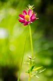 Exotisk blomma på grön bakgrund Royaltyfri Fotografi