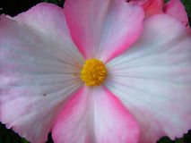 exotisk blommamjukhet Royaltyfri Foto