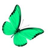Exotisk chokladalbatross i utsmyckad grön färg som isoleras på whit fotografering för bildbyråer