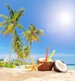 Exotisk coctail i kokosnötkopp på den tropiska stranden Arkivbild