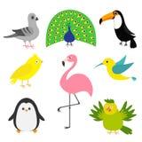 Exotisk fågeluppsättning Colibri kanariefågel, papegoja, duva, duva, flamingo, tukan, pingvin, påfågel Gullig symbol för tecknad  Arkivbild