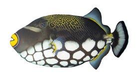 exotisk fisk Arkivbild