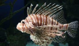 exotisk fisk Arkivbilder