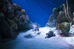 Exotisk fisk royaltyfria bilder