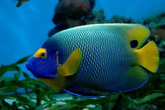 exotisk fisk Royaltyfri Bild