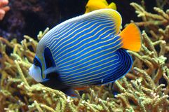 exotisk fisk royaltyfria foton
