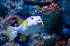 exotisk fisk för c Arkivbild