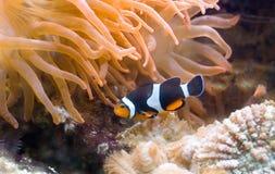 exotisk fisk för D Royaltyfria Bilder