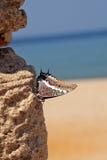 exotisk fjäril Arkivfoton
