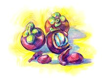 Exotisk fruktGarciniamangostana Royaltyfria Bilder