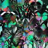 Exotisk gräsplan- och grå färgbakgrundstextur vid sammanställningen av M Royaltyfri Bild