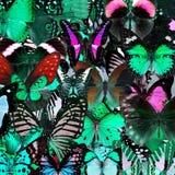 Exotisk grön bakgrundstextur vid sammanställningen av många butte Royaltyfri Bild