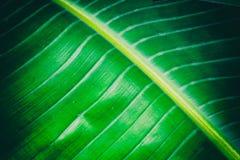 Exotisk grön bladnärbildtextur
