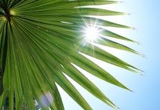 exotisk grön växt Royaltyfria Foton
