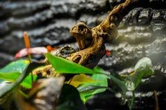 Exotisk groda på trädfilial med gröna sidor och blommor royaltyfria bilder