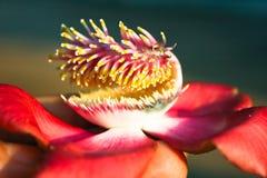Exotisk indisk blomma Arkivfoton