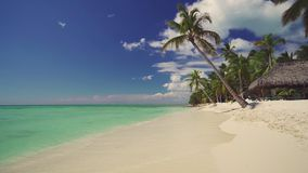 exotisk ? Kokosn?tpalmtr?d och tropisk strand Sommarferie p? det karibiskt lager videofilmer