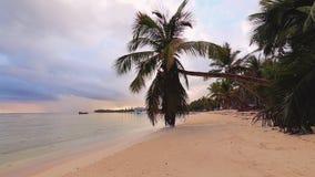 exotisk ? Kokosn?tpalmtr?d och tropisk strand Sommarferie p? det karibiskt stock video