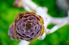 Exotisk lilablommanärbild Royaltyfri Foto