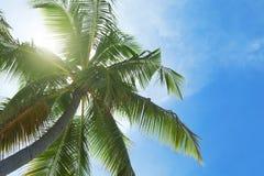 exotisk palmträd Arkivbild