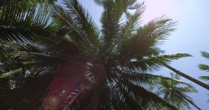 Exotisk palmträd i djungeln Spåring av skottet runt om palmträdet lager videofilmer