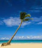 Exotisk palmträd på den sandiga stranden Arkivbild