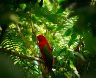 Exotisk papegoja i djungel Royaltyfri Foto