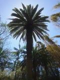 Exotisk parc royaltyfria foton