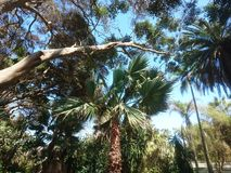 exotisk park Royaltyfria Foton