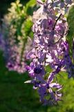 Exotisk purpurfärgad tropisk blomma Royaltyfri Bild