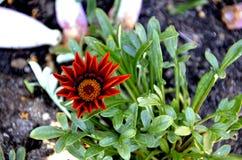 Exotisk röd blomma Royaltyfria Bilder
