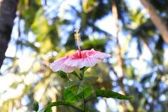 Exotisk rosa färgblommanärbild Royaltyfri Bild