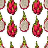 Exotisk sömlös vektormodell Draken bär frukt på den ljusa vita bakgrunden Arkivbild