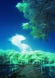 Exotisk sikt av träd, bron och drakehimmel Arkivbilder