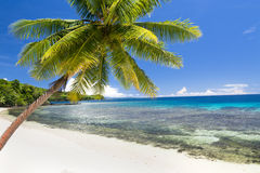 Exotisk strand med palmträdet Arkivfoto