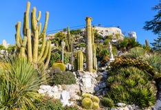 Exotisk trädgård i den Eze byn fotografering för bildbyråer