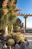 Exotisk trädgård med observationsgrottan, Monaco royaltyfri bild