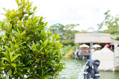 Exotisk tropisk bakgrundsmodell, Bali ö, Indonesien Arkivfoton