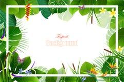 Exotisk tropisk bladbakgrund i hälsningmall arkivfoto