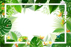 Exotisk tropisk bladbakgrund i hälsningmall fotografering för bildbyråer