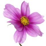 Exotisk tropisk blomma Arkivfoto