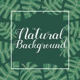Exotisk tropisk grön bakgrund för baner för sidaramgräns arkivfoto