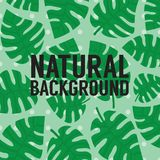 Exotisk tropisk grön sidabanerbakgrund royaltyfria bilder